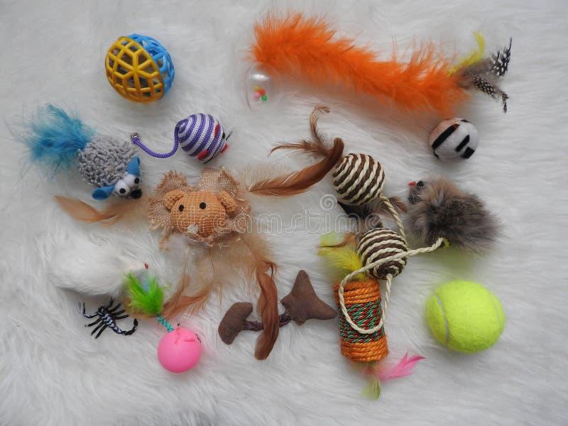 Composizione piana in disposizione con gli accessori per il cane ed il gatto su fondo di legno Animale domestico care immagine stock
