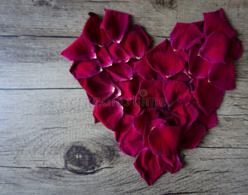 Composizione posta piana con i petali rosa che formano un cuore che lascia PS immagini stock