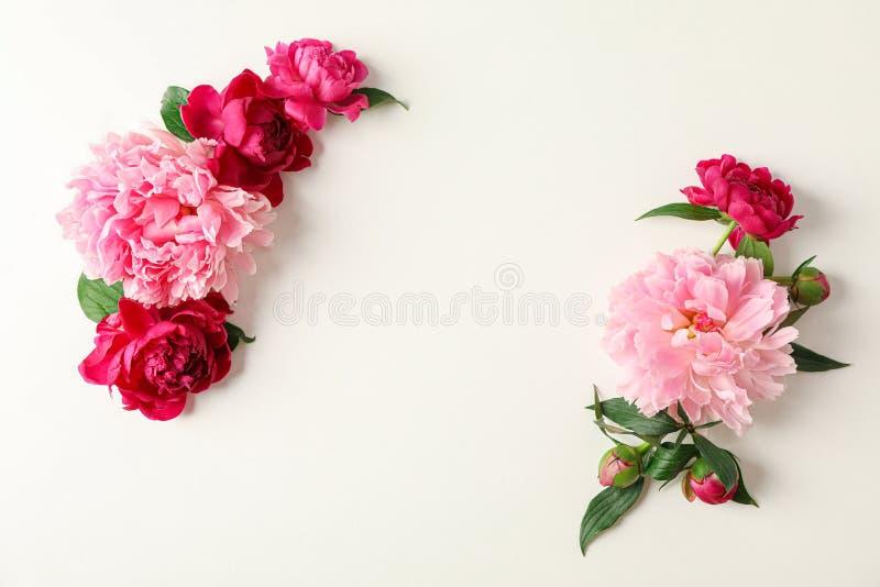 Composizione posta piana con le belle peonie su fondo bianco, spazio per testo fotografie stock libere da diritti