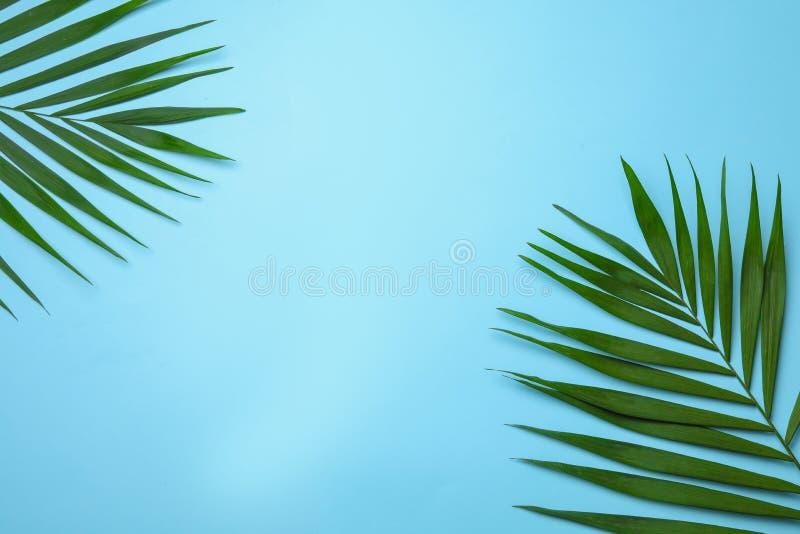 Composizione posta piana con le foglie di palma tropicali dell'areca e spazio per testo fotografia stock libera da diritti