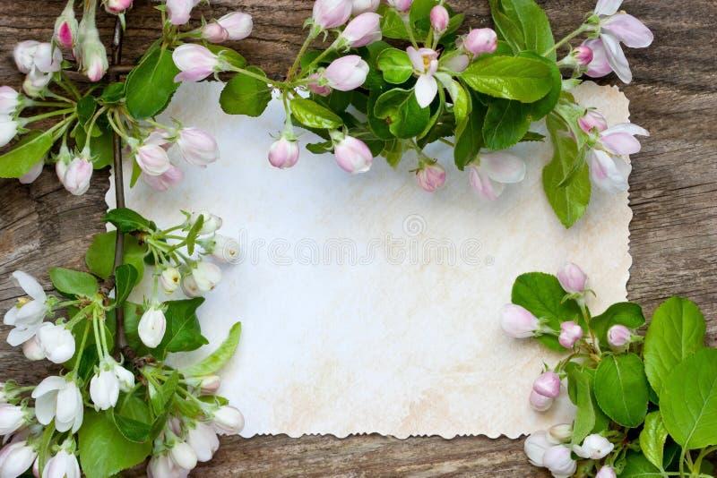 Composizione romantica con i fiori della mela immagine stock libera da diritti
