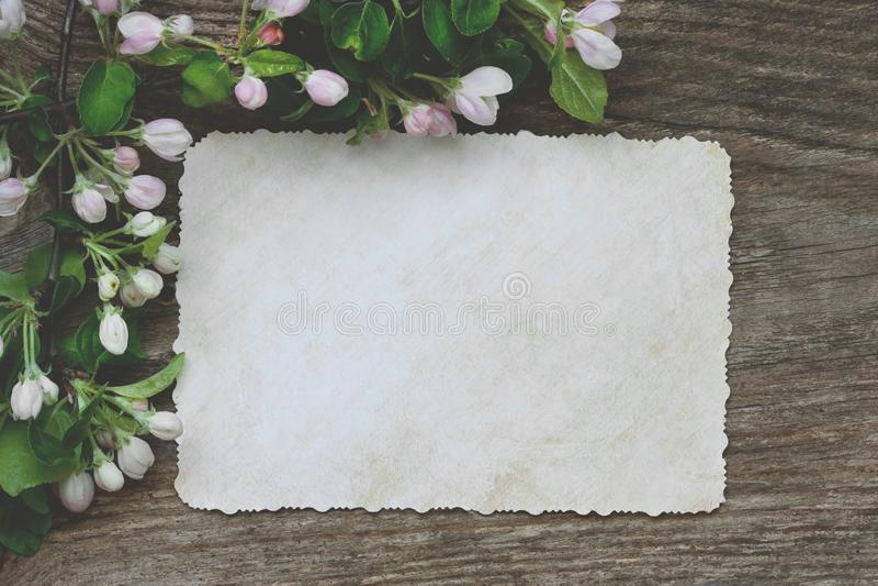 Composizione romantica con i fiori della mela immagini stock libere da diritti