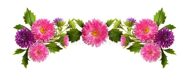 Composizione rosa e porpora nei fiori e nei germogli dell'aster immagini stock