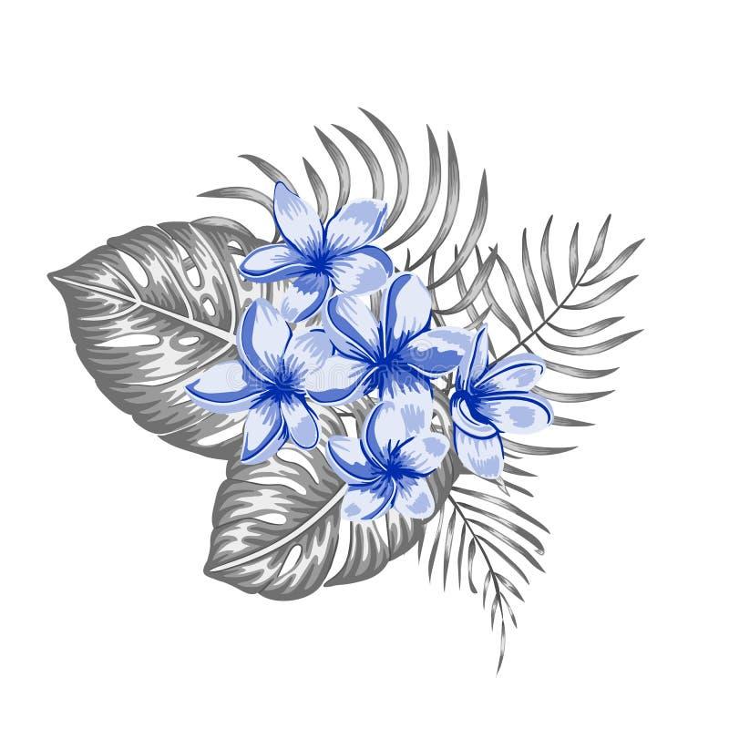 Composizione tropicale di vettore dei fiori blu di plumeria e del monstera grigio e foglie di palma isolate su fondo bianco illustrazione vettoriale