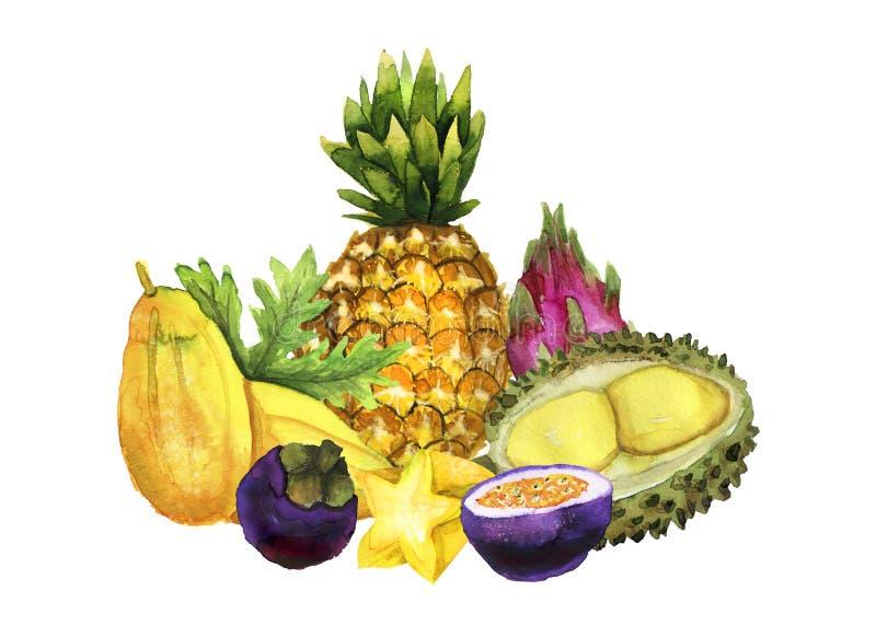 Composizione tropicale luminosa nella frutta dell'acquerello disegnato a mano royalty illustrazione gratis
