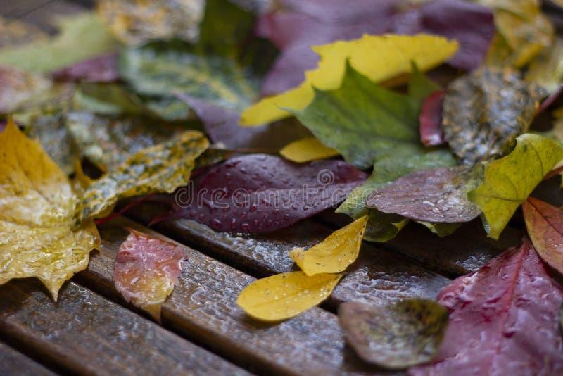 Composizione variopinta nelle foglie di autunno sulla tavola di legno con i waterdrops fotografia stock libera da diritti