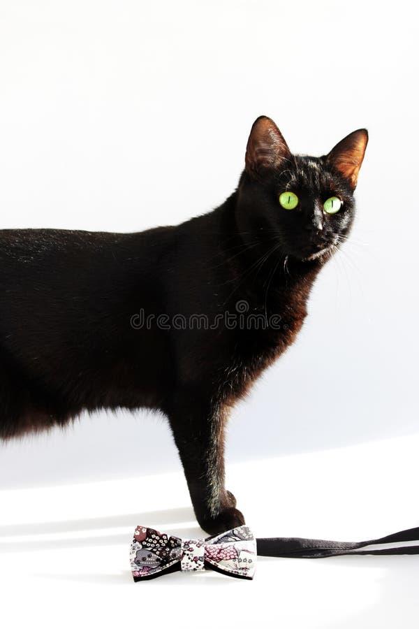 Composizione verticale: Farfallino esagerato e gatto nero con gli occhi verdi su un fondo bianco immagini stock