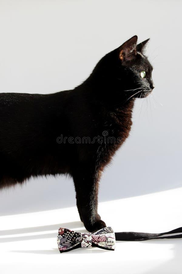 Composizione verticale: Farfallino esagerato e gatto nero con gli occhi verdi su un fondo bianco fotografie stock