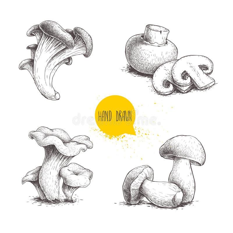 Composizioni disegnate a mano nei funghi di stile di schizzo messe Il fungo prataiolo con i tagli, le ostriche, i galletti e il p illustrazione vettoriale