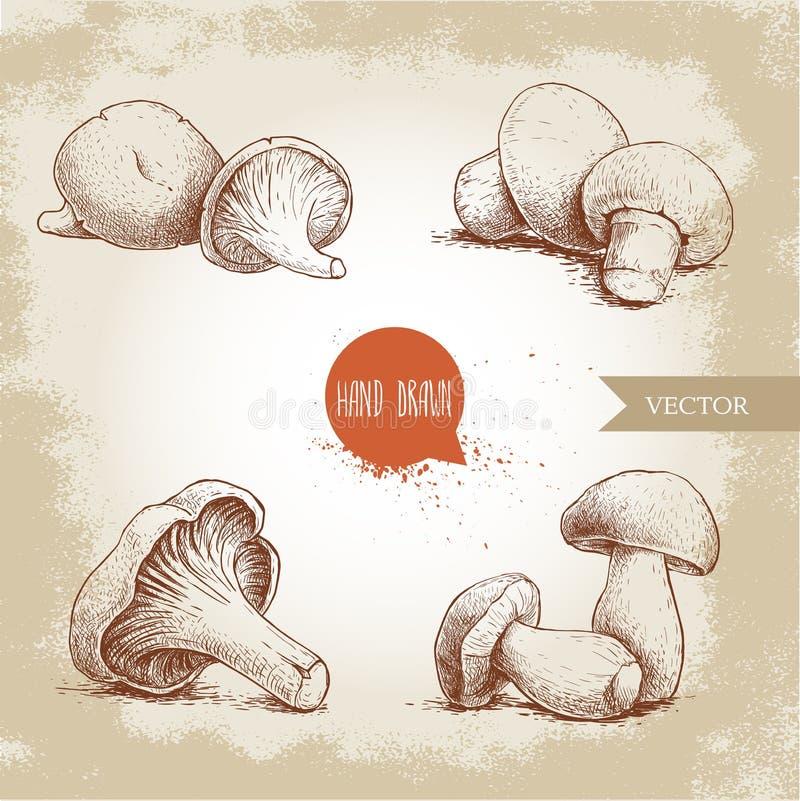 Composizioni disegnate a mano nei funghi di stile di schizzo messe Funghi prataioli, ostriche, galletti e funghi di porcini illustrazione vettoriale