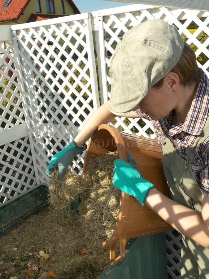 Compost bin. Female gardener dumping cut lawn grass into green plastic compost bin royalty free stock photos