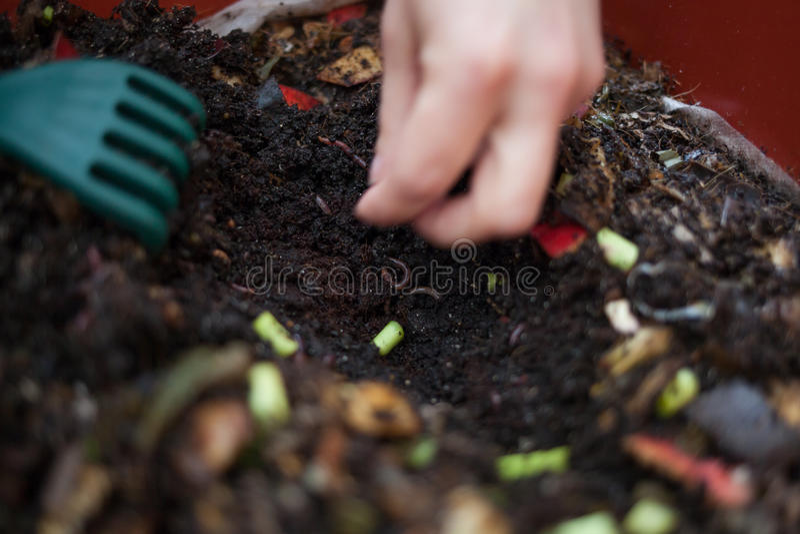 composting fotografia de stock royalty free