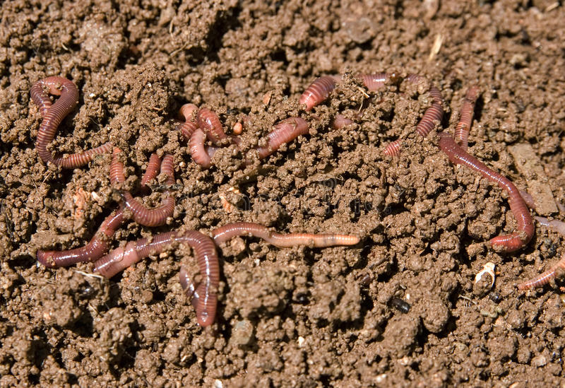 Download Composting garden worms stock photo. Image of compost - 9469078