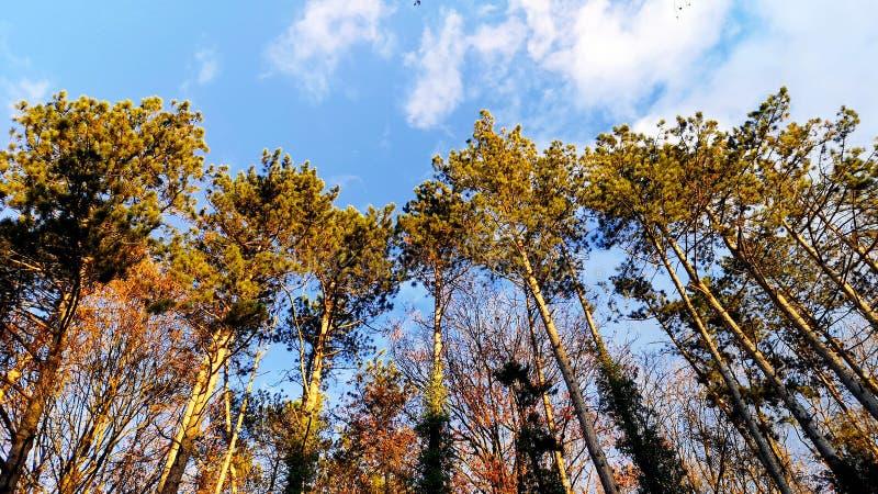 Composto das árvores e do céu fotografia de stock