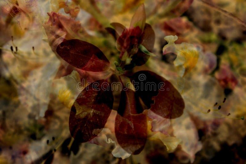 Composto das folhas fotografia de stock