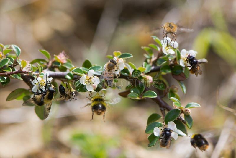 Composto de abelhas e de indicações britânicas fotografia de stock