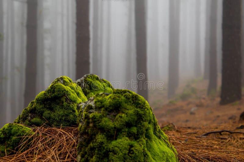 compozition im Wald stockbild