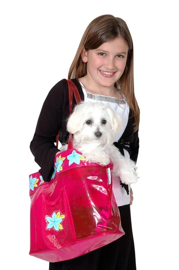 Compra do filhote de cachorro fotografia de stock