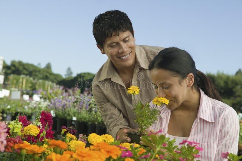Compra dos pares em flores de cheiro do berçário da planta fotografia de stock