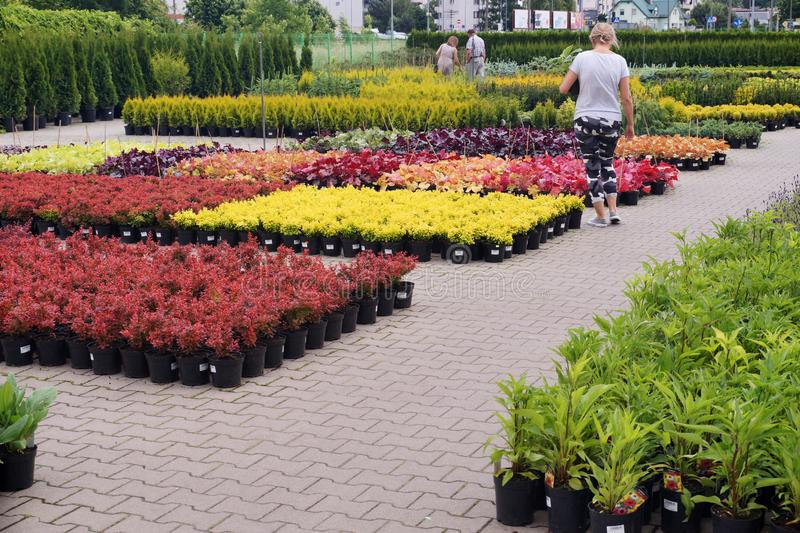 Compra no Garden Center Compradores entre centenas de potenciômetros com plantas imagens de stock royalty free
