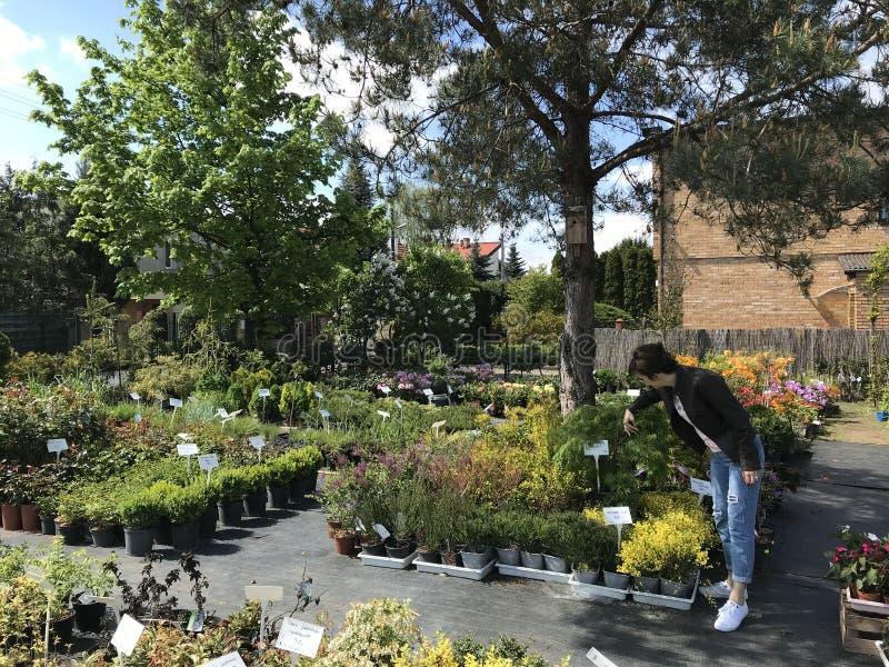 Compras de la mujer para las nuevas plantas y flores en cultivar un huerto y el vendedor al aire libre de las plantas foto de archivo