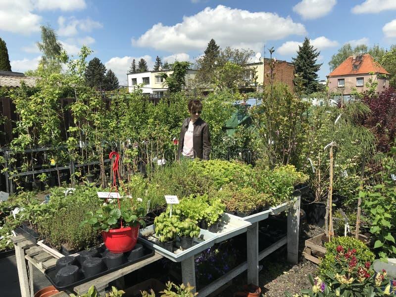 Compras de la mujer para las nuevas plantas y flores en cultivar un huerto y el vendedor al aire libre de las plantas imagenes de archivo
