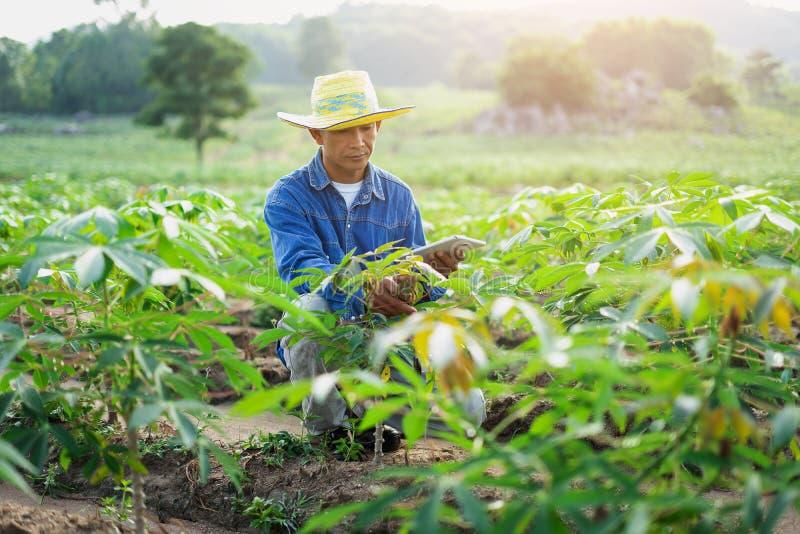 Compressa della tenuta dell'agricoltore dell'uomo d'affari nel giacimento della manioca fotografia stock
