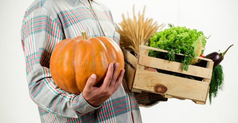 Compri le verdure nostrane fresche Appena dal giardino L'agricoltore porta le verdure del raccolto del canestro o della scatola Q fotografie stock