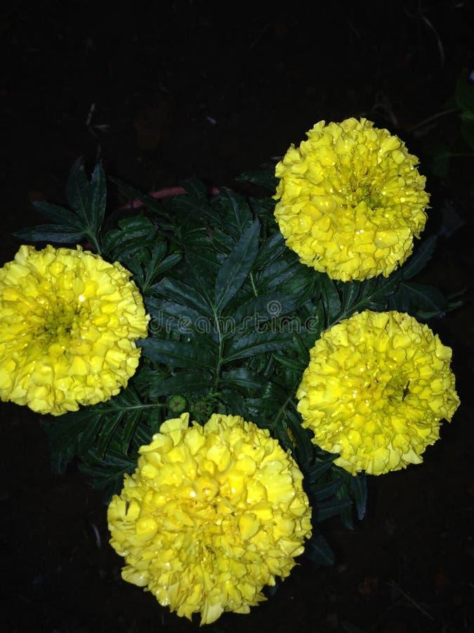 Comprimidos celestiais torcidos da flor do cabelo fotografia de stock royalty free