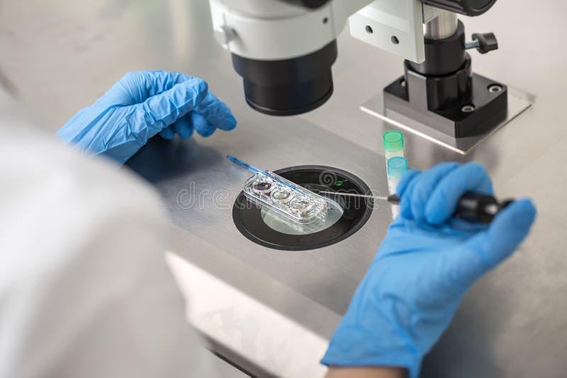 Comprobación de resultado de la fertilización in vitro imágenes de archivo libres de regalías