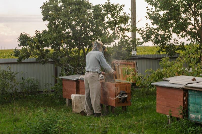 Compruebe la colmena de la abeja para saber si hay la presencia de miel foto de archivo