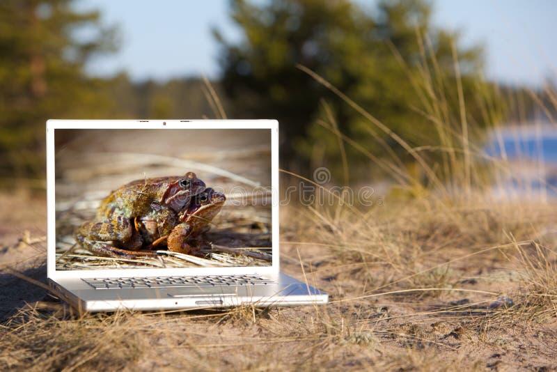 Computadora portátil al aire libre y ranas de acoplamiento imagen de archivo libre de regalías