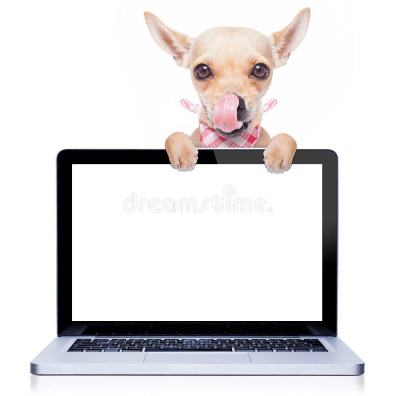 Computer dog stock image
