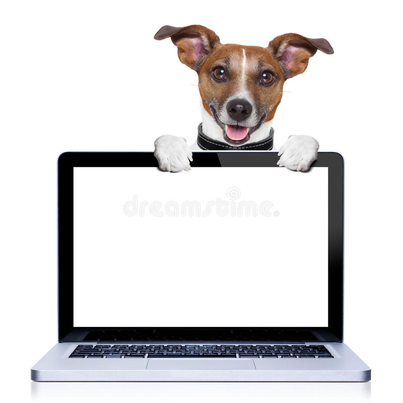 Computer dog royalty free stock photo
