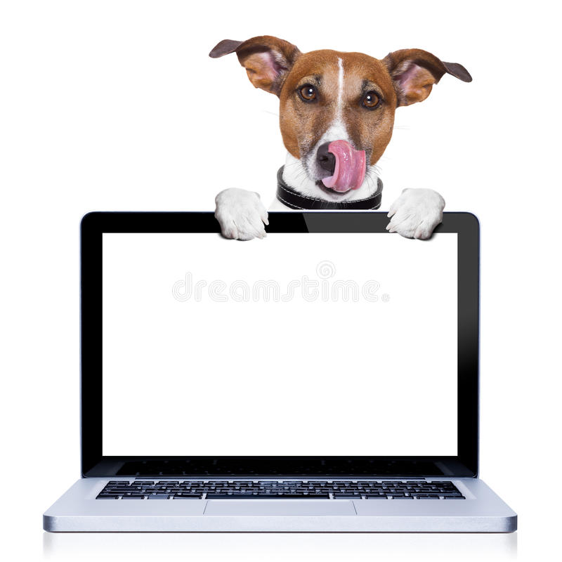 Computer dog stock photography