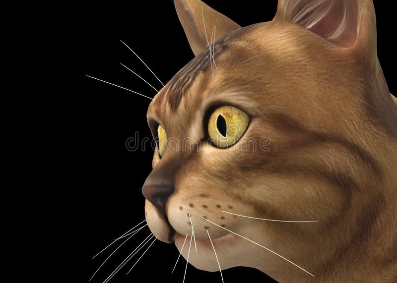Closeup of a tabby cat kitten against a black backdrop stock photo