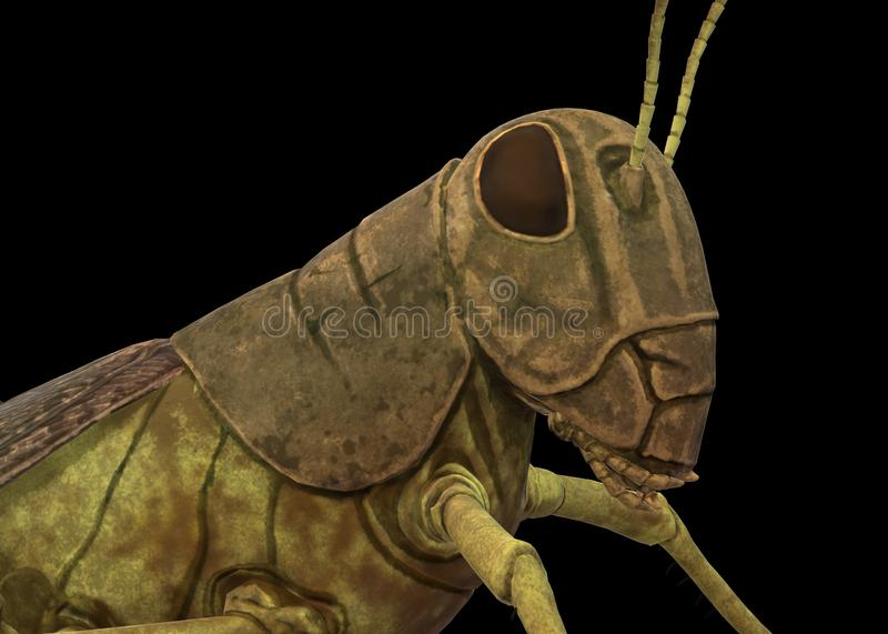 A closeup illustration of a grasshopper against a black backdrop royalty free stock photo