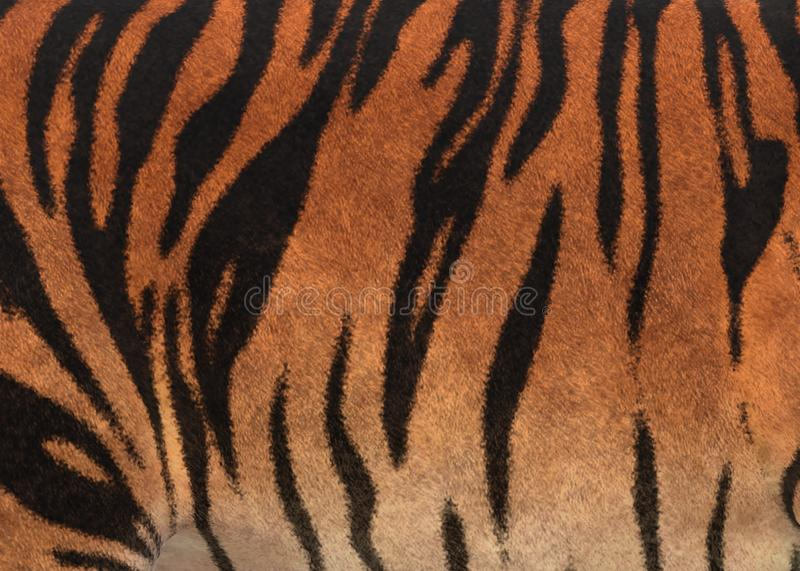 Closeup of some black stripe patterns and pale orange skin of a tiger royalty free stock photos