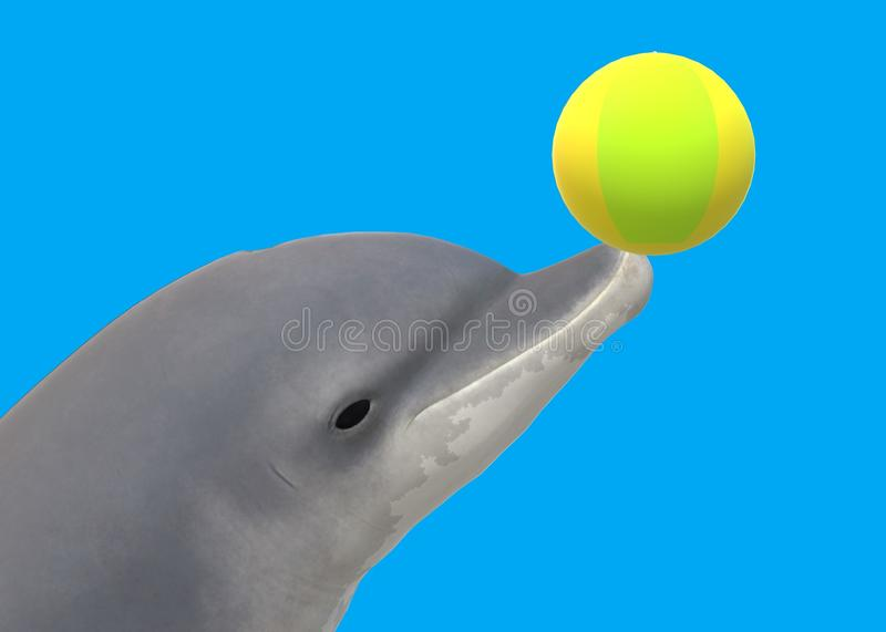 A dolphin balancing a colorful beach ball with its snout royalty free stock photo