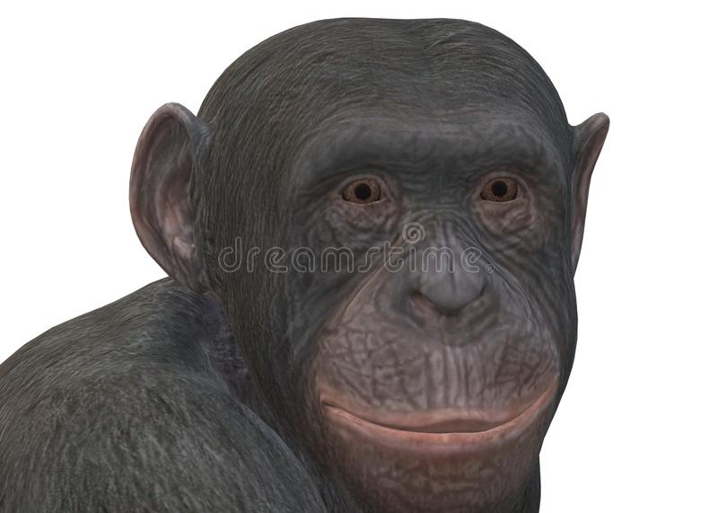 A closeup illustration of a primate monkey against a white backdrop royalty free stock image