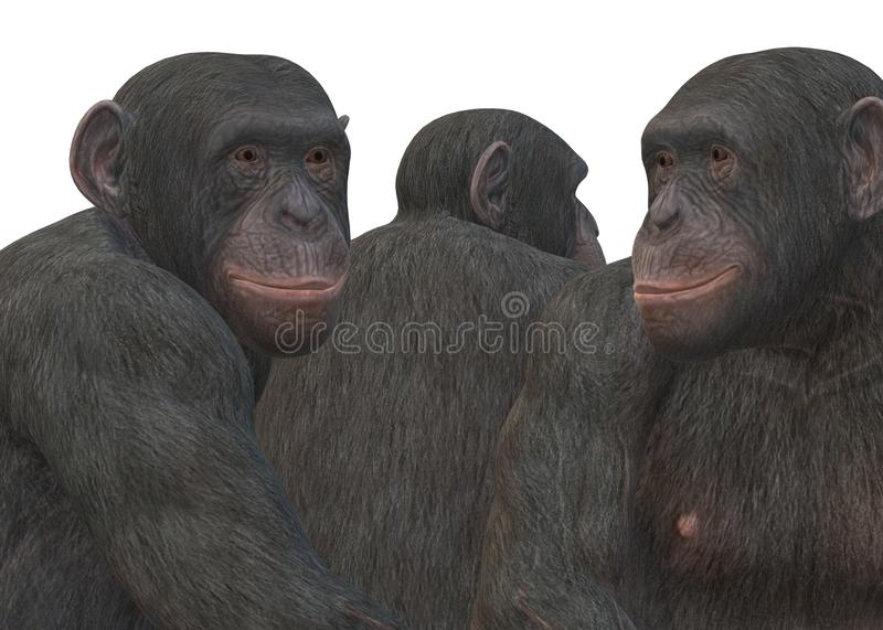 An illustration of a group of three primate monkeys against a white backdrop royalty free stock photo