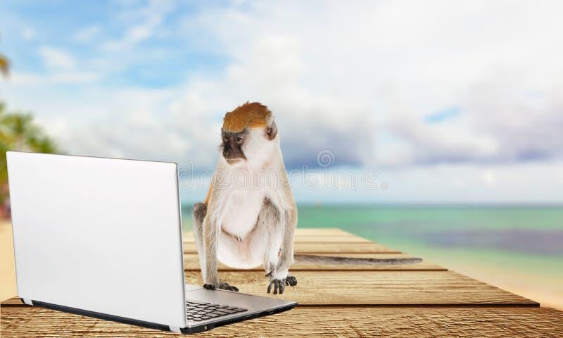 Computeraap royalty-vrije stock afbeelding