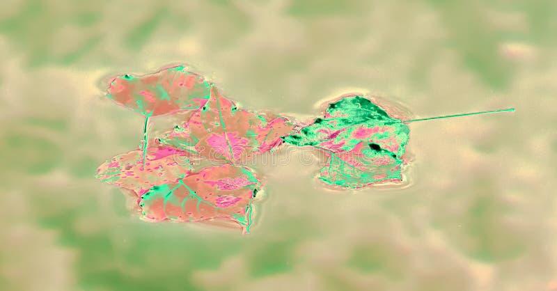 Computerillustratie op droge bladeren wordt gebaseerd dat royalty-vrije stock foto's