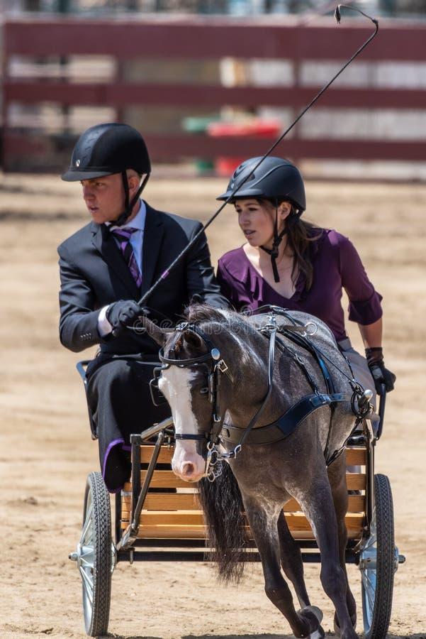 Comunicazione precisa fra l'essere umano ed il cavallo fotografie stock