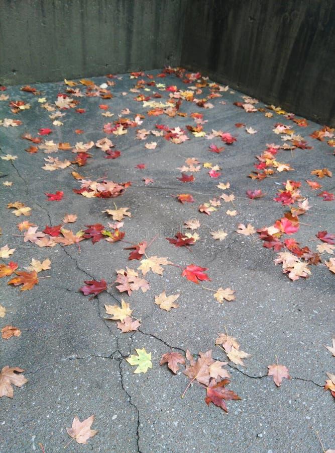 Comunidad de hojas fotos de archivo