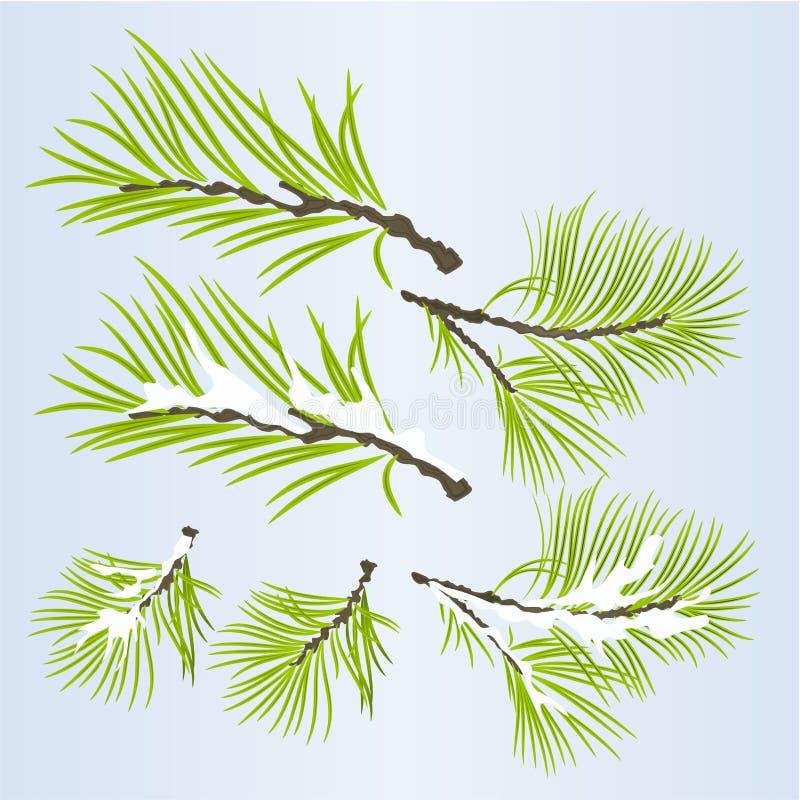Conífera enorme de las ramas de árbol de pino otoñal y ejemplo nevoso del vector del fondo natural del invierno editable ilustración del vector