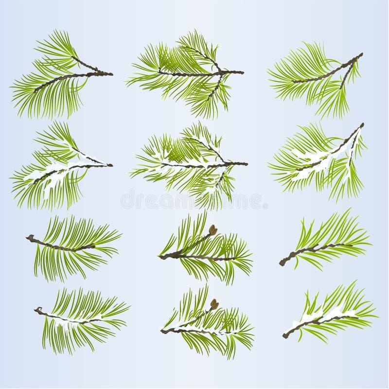Conífera enorme de las ramas de árbol de pino otoñal y ejemplo nevoso del vector del sistema dos del fondo natural del invierno e ilustración del vector