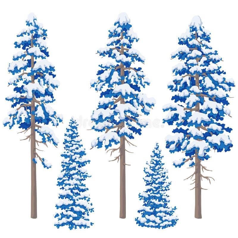 Coníferas do inverno ajustadas ilustração do vetor