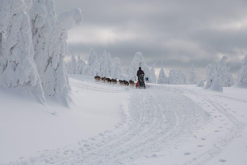 Con dogsled sulle colline di Orlicke del pettine fotografie stock libere da diritti
