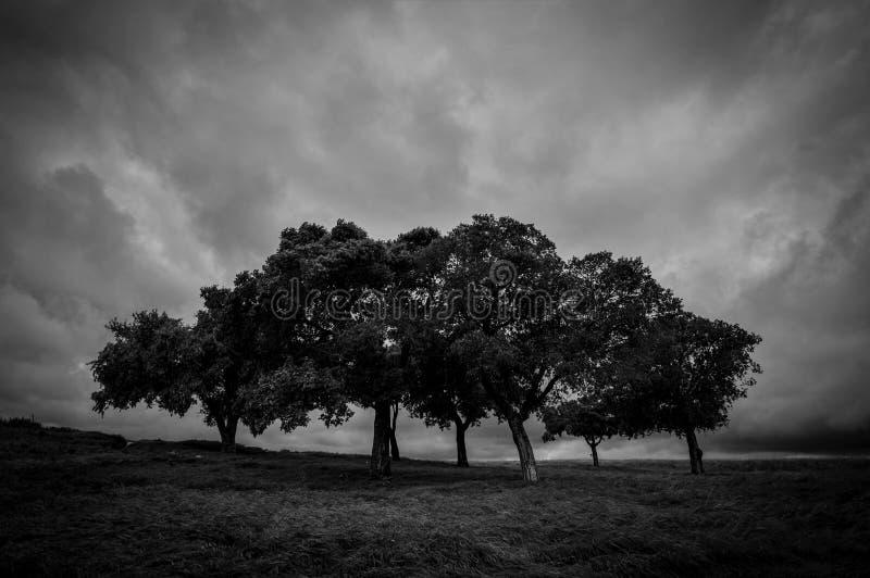 Con firmeza en la tormenta foto de archivo